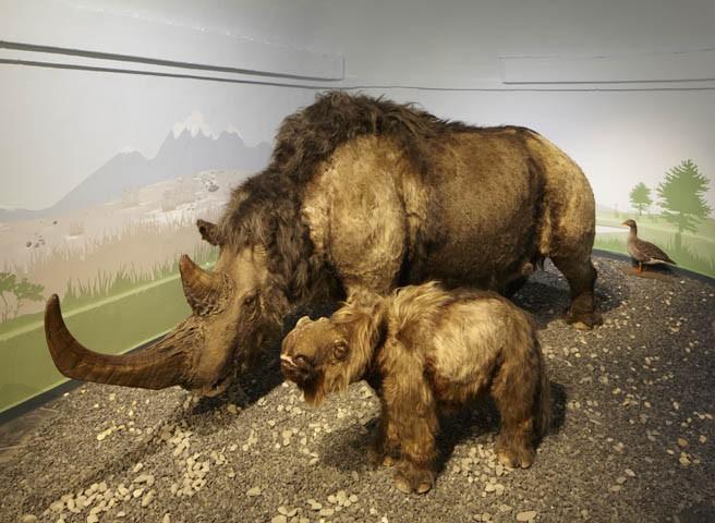 Startseite-Kwast-Museen-Eiszeit